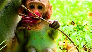 What happen on baby? cute little baby very brave , baby monkey Peter