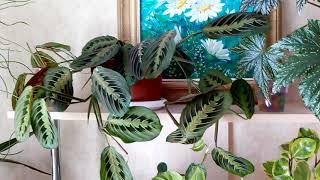 Комнатные цветы.Майский обзор моего зеленого уголка 2019 год.