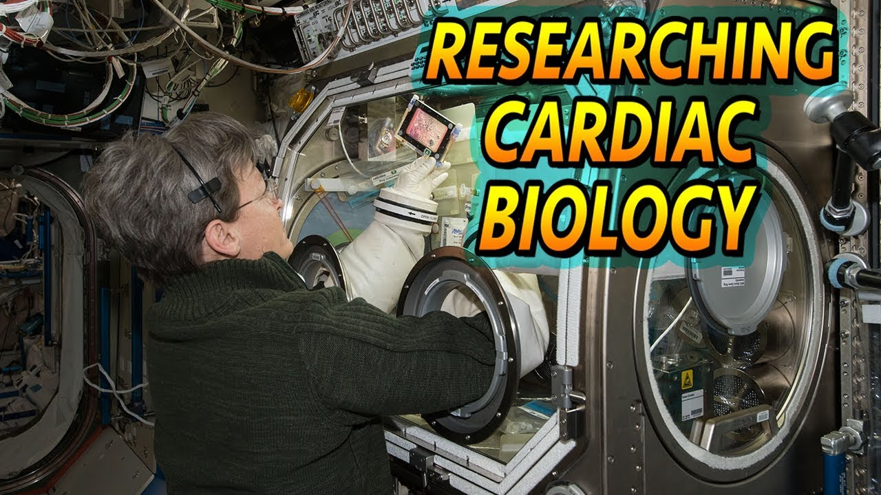 Cardiac Biology In Space