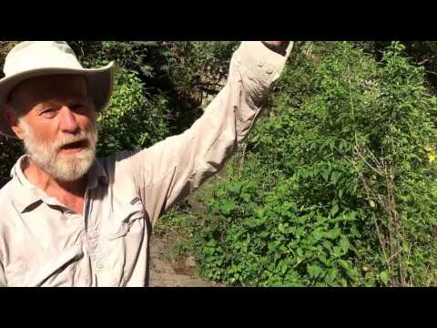 Larry Laframboise of Ajijic Hiking Group Gives Us A Tour of the Mountains Above Ajijic, Mexico
