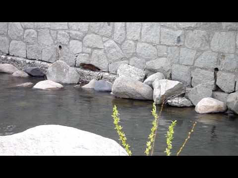 Reno Truckee River Mink 3/3