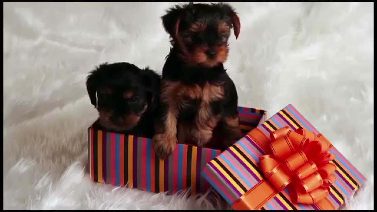 A Home For Christmas.Before You Give A Dog A Home For Christmas Watch This