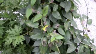 Sheri Harper's Trellis Garden & Plants