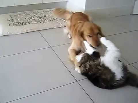 Very funny cat and dog! funny pet videos