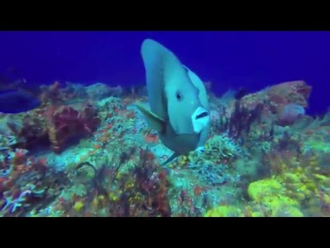 Mexico Belize 2015 diving video gopro