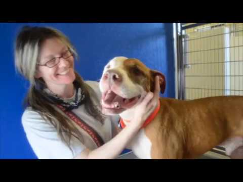 Pit Bull Epidemic: The Most Popular Dog that Nobody Wants--A Documentary