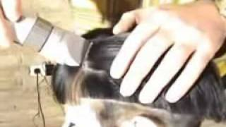 Repeat youtube video haircut.hu_superb haircut and shave