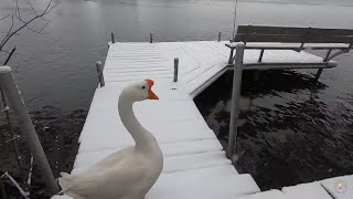 """""""""""Chores in the Snow"""" 10/20/20 with Pet Goose George™"""