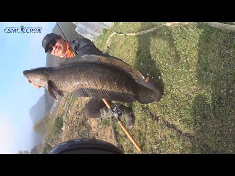 GSMC SNAKEHEAD FISHING 20170408 가물치낚시