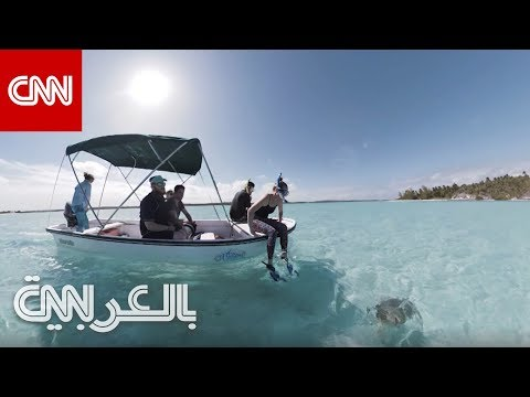 تجربة العمر.. السباحة مع السلاحف البحرية في جزر البهاماز  - 16:54-2019 / 4 / 23