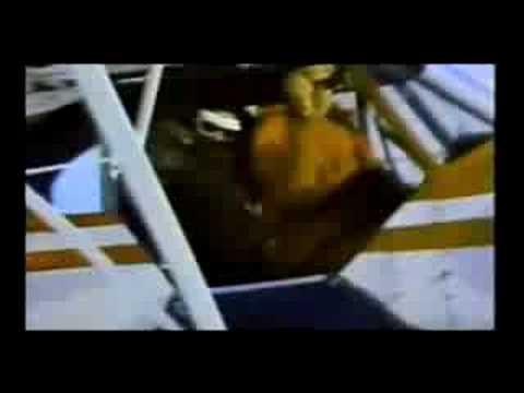 Sarah Palin Champions Barbaric Aerial Hunting Of Wolves