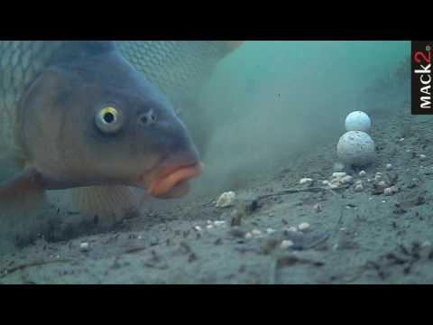 Carpfishing Underwater MACK 2