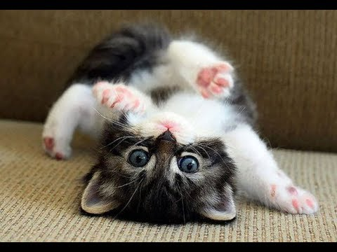 Cute Funny Kittens 😜🐱 Funny Cats (Full) [Funny Pets]