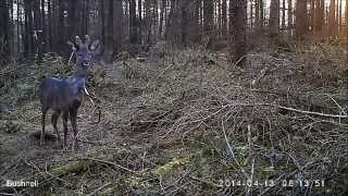 Camera trap highlights - Kennedy Wild Bird Food Forest