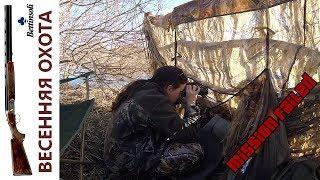 Какие глупые ошибки! Или не везёт? Весенняя охота на селезня в Сибири.