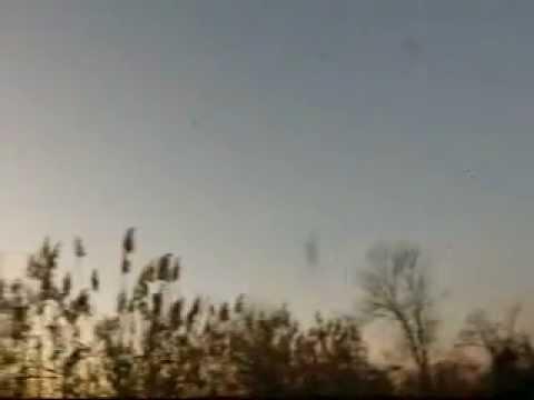 MANNINGTON NJ  BLACKBIRD FLOCK AT DUSK 12_02_2011.wmv