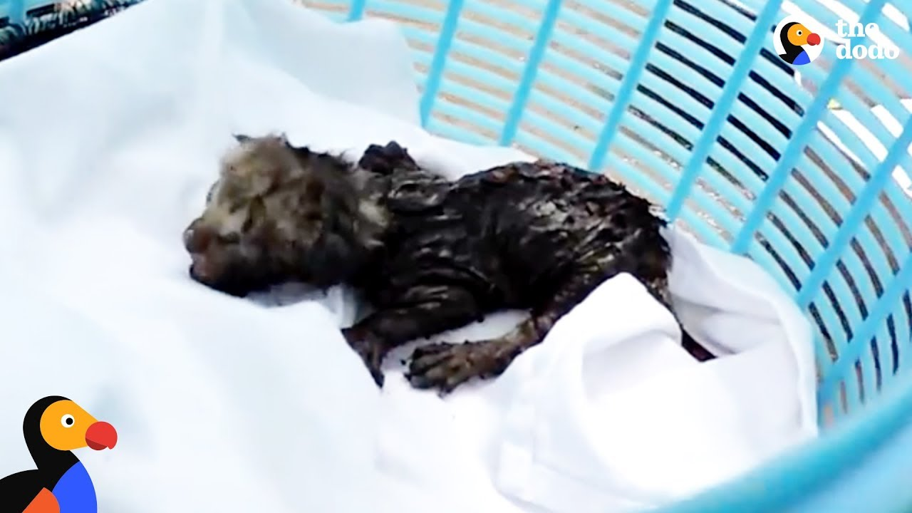 Tiny Kittens Rescued From An Air Duct | The Dodo
