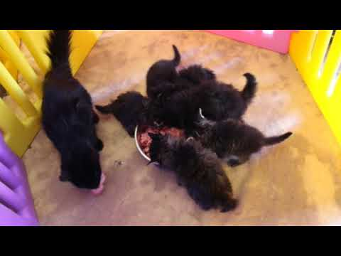 Raw Feeding Puppies and Kittens