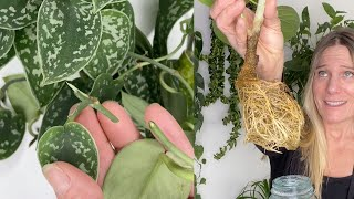 How to Propagate Lİke a Pro! | The 6 Ways to Propagate Your Indoor Plants