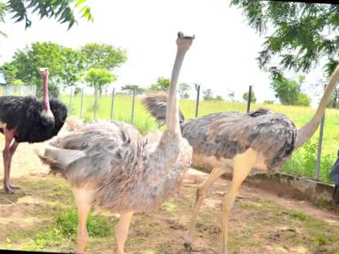UNIVERSITY OF ILORIN ZOOLOGICAL GARDEN