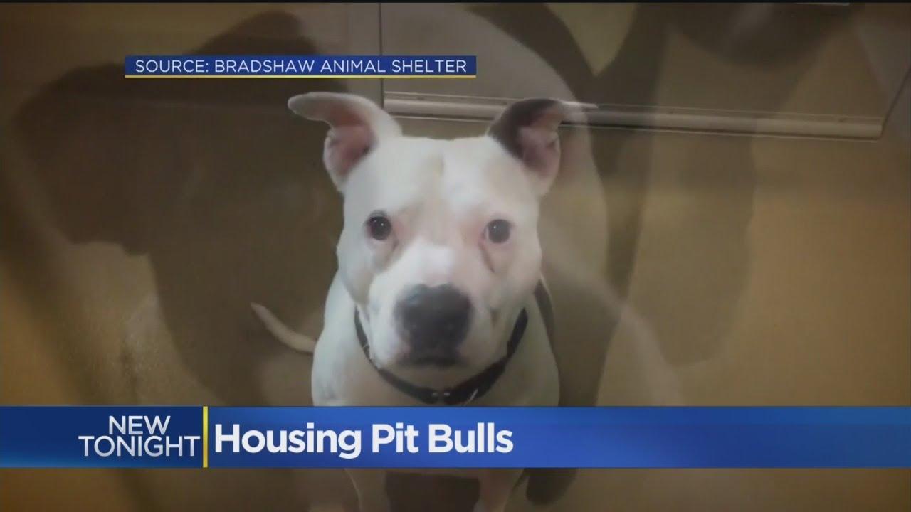 Bradshaw Animal Shelter Working To Change Public's Feelings On Pit Bulls