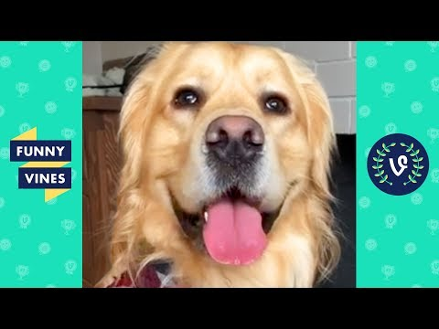 TRY NOT TO LAUGH - Funny Animals & Pets of the Week!