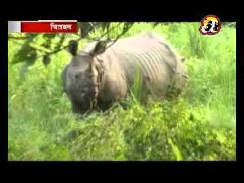 Number of different animals in Chitwan National Park - Chitwan