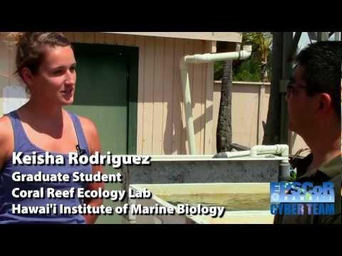 Keisha Rodriguez, Coral Reef Ecology Lab, Hawai'i Institute Of Marine Biology