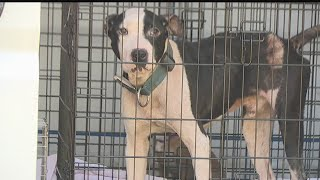 Investigators report finding poor conditions, animals in Youngstown home