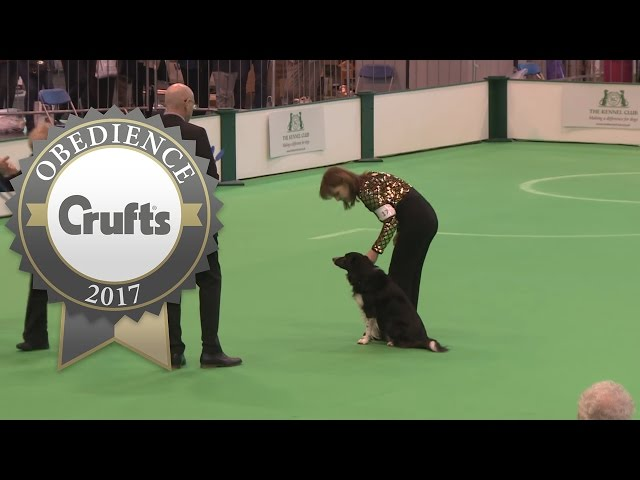 Obedience Championship - Bitches - Scent - Part 4 | Crufts 2017