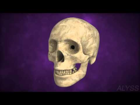 Human skeletal system - For middle school Biology students(grades 6 to 8)