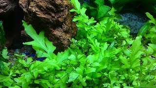 Update Aquarium Plants Growing Fast