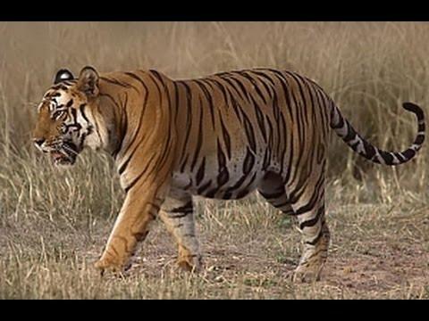 Die 10 bedrohtesten Tierarten durch den Handel 🍀 HD