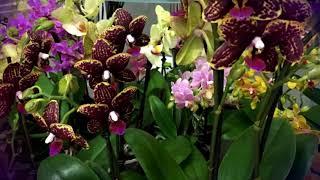 Железное правило по уходу за орхидеей, чтобы цвела #mosshow