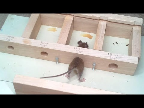How small a hole can a mouse get through?Experiments.