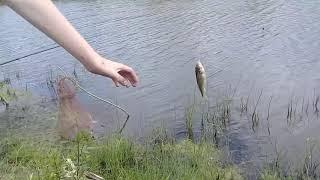 Ловля на резинку с берега рыбалка на КАРАСЯ