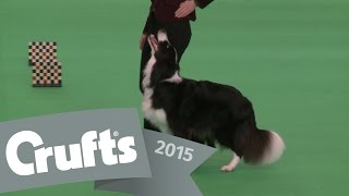 Dog Obedience Championships - Part 1 | Crufts 2015