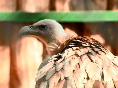 В пензенском зоопарке появились редкие птицы, занесенные в Красную книгу