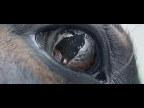 Zombie - La Era De La Extinción - Pelicula Completa En Español