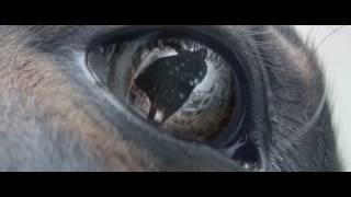 Download Video Zombie - La era de la extinción - Pelicula completa en Español MP3 3GP MP4