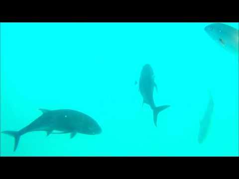 GT's Underwater attacking camera!