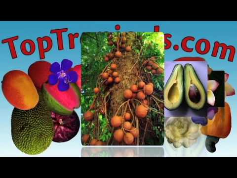 Top Tropicals Video Introduction
