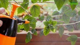 Jak ratować rośliny po suszy lub zalaniu