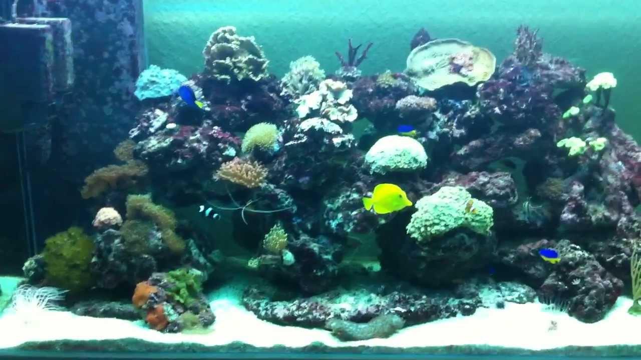 mon aquarium eau de mer mov
