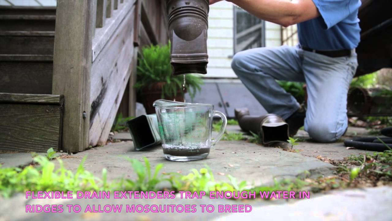 mosquitoes can breed in flexible downspout extensions youtube