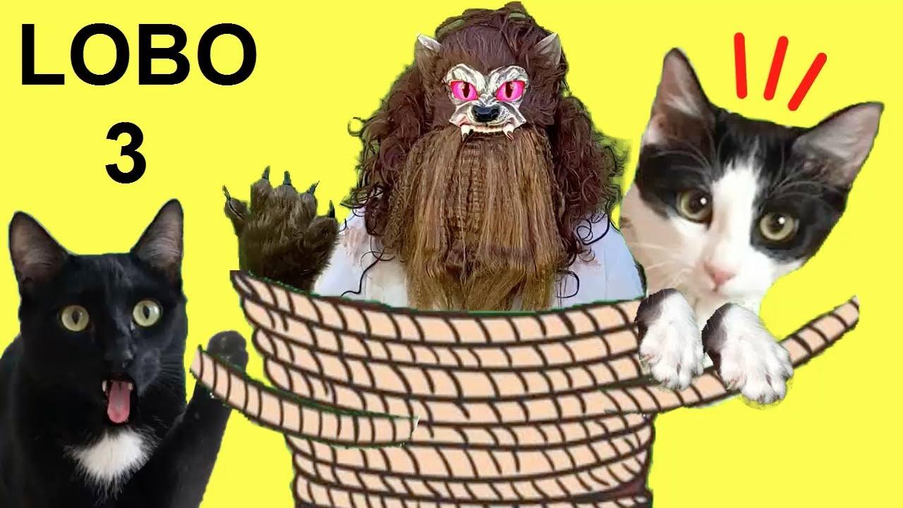 Gatos Luna y Estrella / El hombre lobo CAP 3 Bromas divertidas en casa / Videos de gatitos