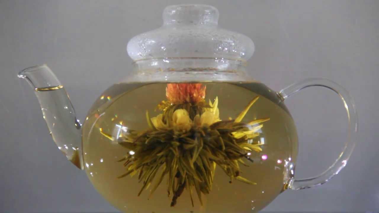 Eclosion d une fleur de thé - n°1 - YouTube 2b6989e1d6c