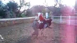 connectYoutube - Michaela Riding An Ostrich