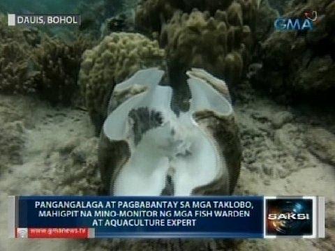 Saksi: Mga dagdag na taklobo, inilagay sa marine sanctuary sa Bohol