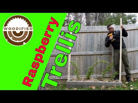 raspberry-trellis-how-to